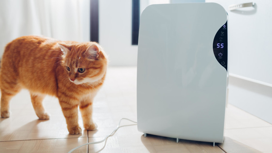 Best Air Purifiers for Pets