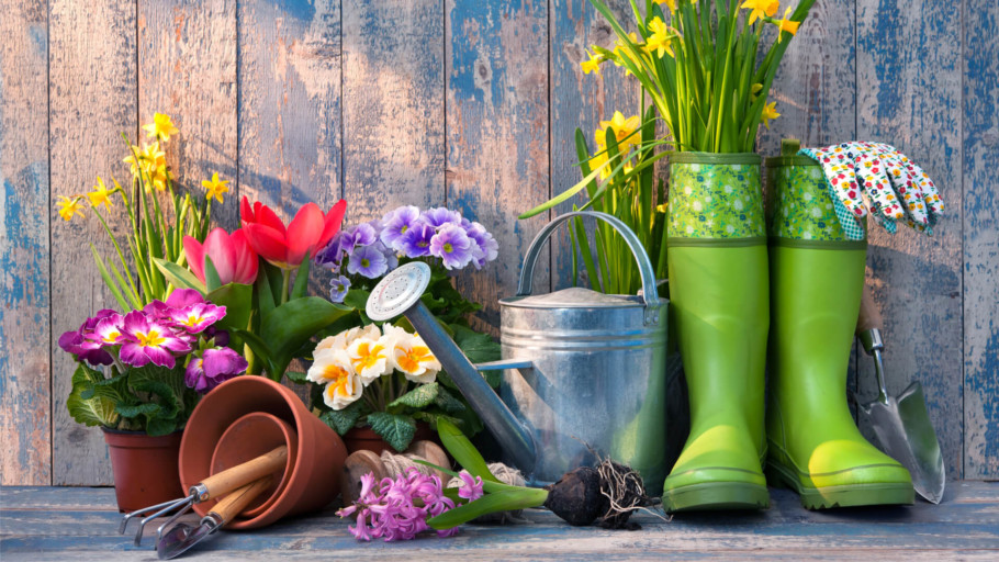 Landscape Gardening for Beginners: Which Plants Should I Grow Together?    HowtoHome