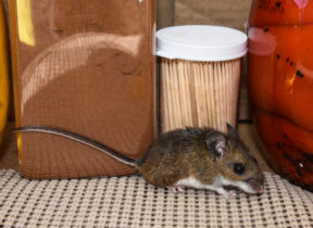 Common Household Pests: Top Tips on Prevention and Control
