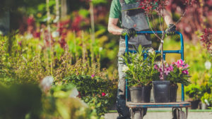 Garden Projects to Tackle In Early Spring