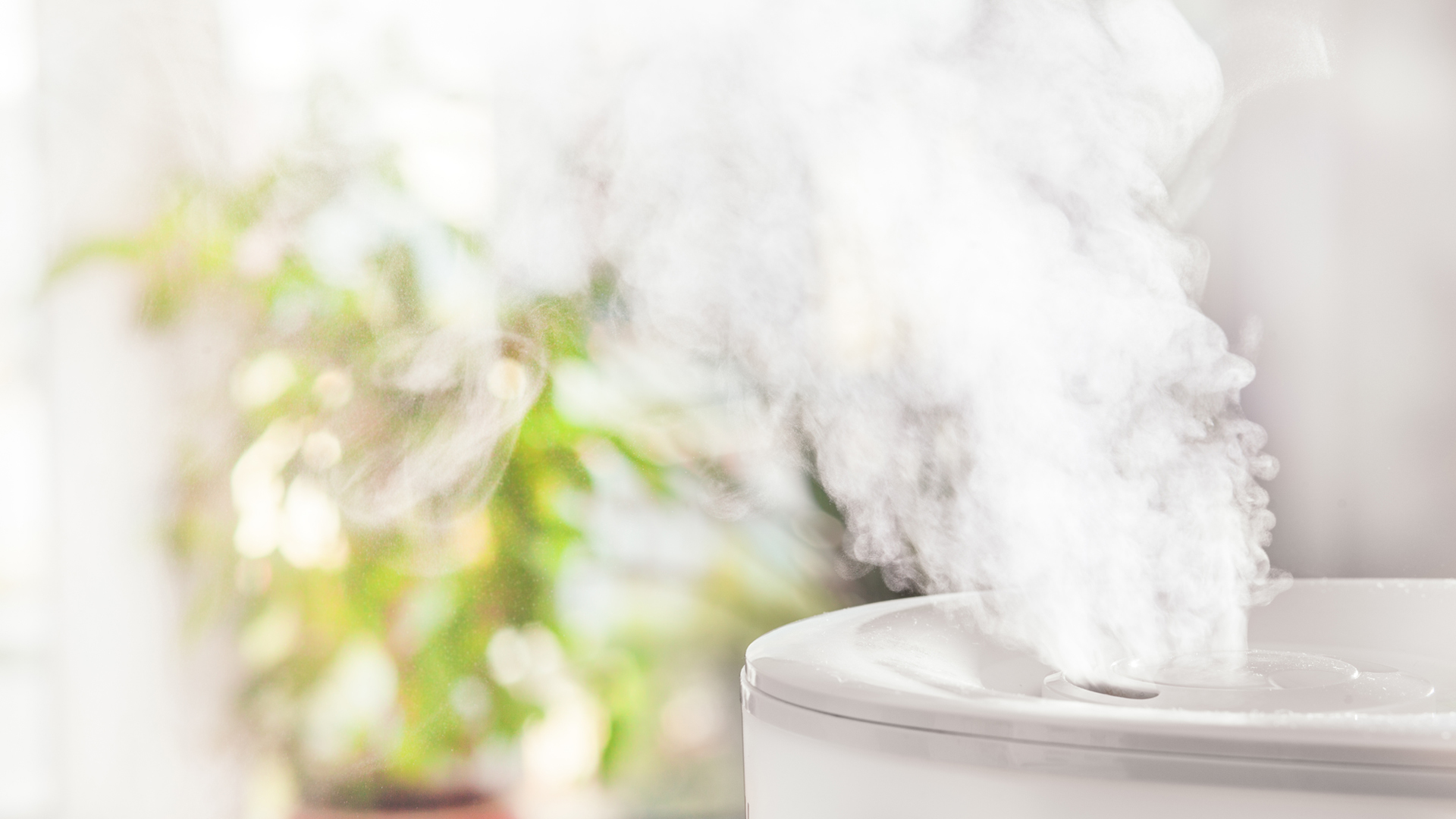 Features Things to Consider When Buying a Humidifier
