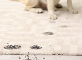 Pet Gates: Our Top Choices to Stop Dirty Paws Reaching Your Furniture